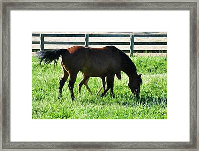 A Mother And Little One Framed Print by Bill Cannon