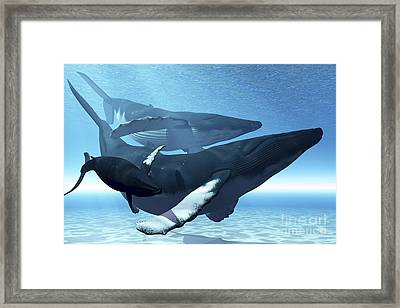 A Mother Humpback Whale Is Escorted Framed Print