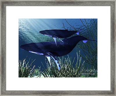 A Mother Humpback Whale Swims Framed Print