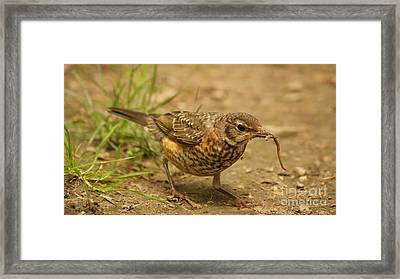 A Mother's Work... Framed Print by Diane Stresing
