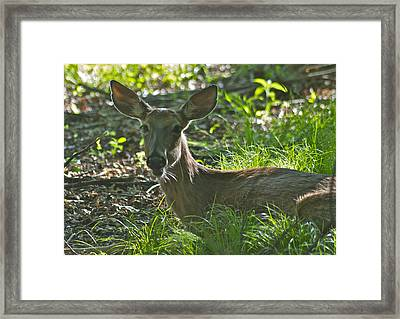 A Mouth Full Framed Print by Michael Peychich