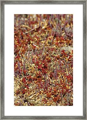 A Myriad Of Bright Red And Orange Framed Print by Jason Edwards