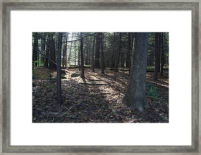A Nature Walk Framed Print by Margie Avellino