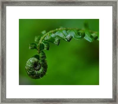 A New Beginning Framed Print by Danielle Del Prado