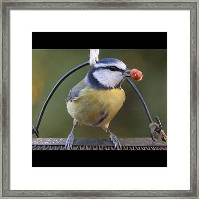 A Nut - Quick - I Got The Prize!! Blue Framed Print