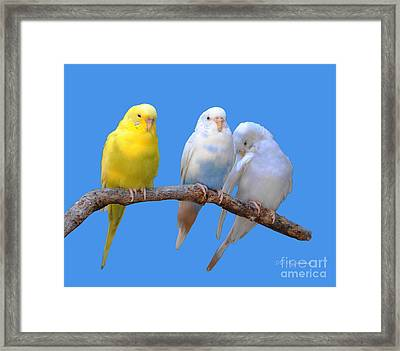 A Pair And A Spare Framed Print by DiDi Higginbotham