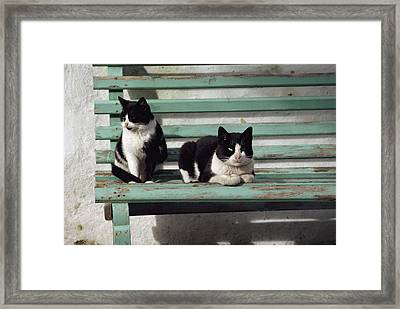 A Pair Of Cats On A Bench Framed Print