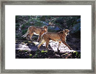 A Pair Of Cheetah's Framed Print by Bill Cannon