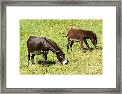 A Pair Of Donkeys Framed Print by Rod Jones