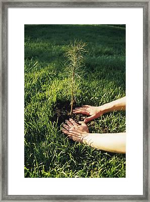 A Pair Of Hands Gently Tamp Soil Framed Print by Scott Sroka