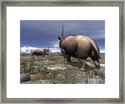A Pair Of Male Elasmotherium Confront Framed Print by Walter Myers