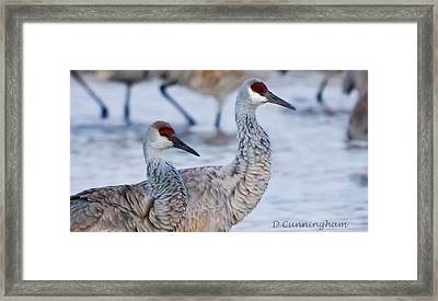 A Pair Of Sandhill Cranes Framed Print