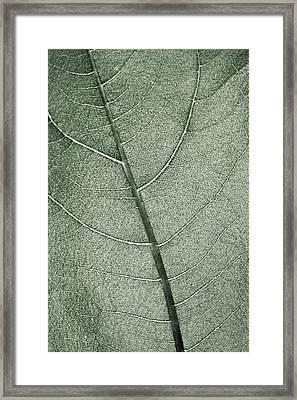 A Pale Green Leaf Framed Print by Sindre Ellingsen