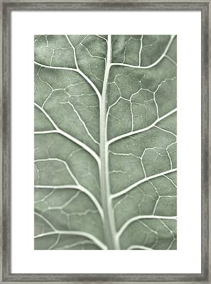 A Pale Leaf, Partially Out Of Focus Framed Print by Sindre Ellingsen