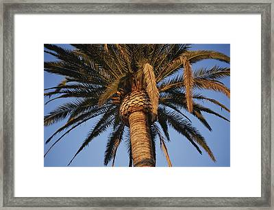 A Palm Tree In Early Morning Light Framed Print by Stephen St. John