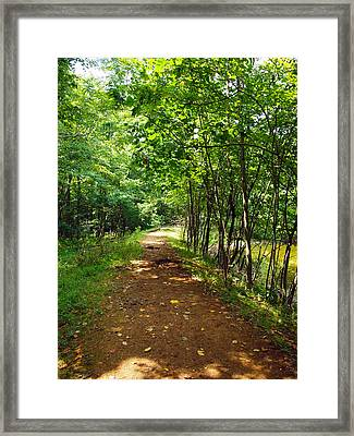 A Path Around The Pond Framed Print by Robert Margetts
