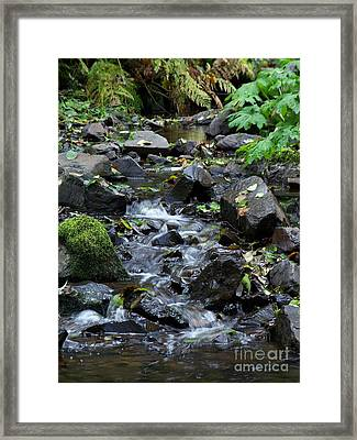 Framed Print featuring the photograph A Peaceful Stream by Chalet Roome-Rigdon