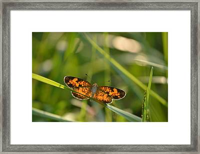 Framed Print featuring the photograph A Pearl In The Grass by JD Grimes