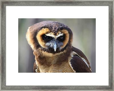 A Penny For Your Thoughts Framed Print by Paulette Thomas