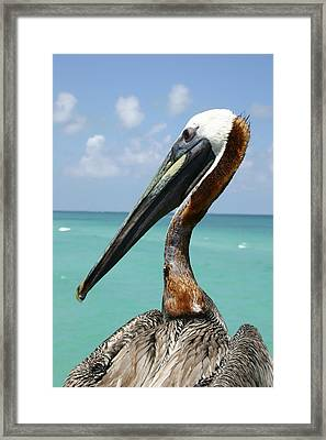 A Personable Pelican Portrait Framed Print by Stephen St. John