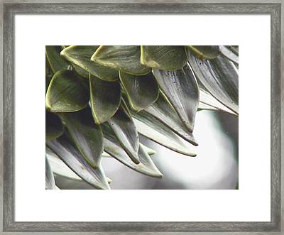 A Piece Of The Puzzle  Framed Print by Pamela Patch