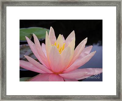 A Pink Water Lily Framed Print