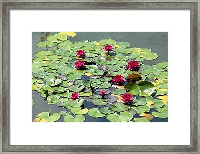 A Place Of Rest In The Sun Framed Print by
