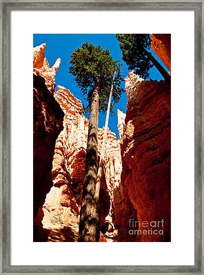 A Place To Grow Framed Print by Bob and Nancy Kendrick