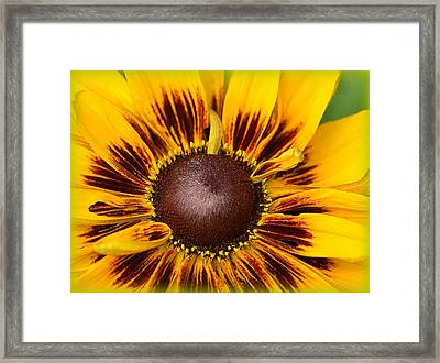 A Pocket Full Of Sunshine... Framed Print