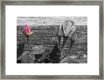 A Pop Of Pink Framed Print