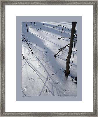 Framed Print featuring the photograph A Popular Path by Patricia Overmoyer