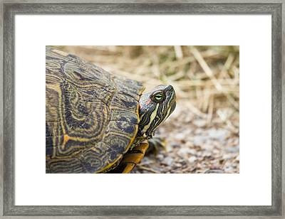 A Portrait Of Reptiles In Texas - Tortoise Framed Print by Ellie Teramoto