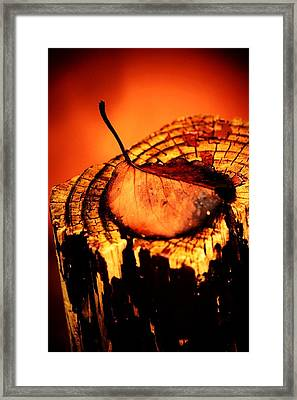 Framed Print featuring the photograph A Pose For Fall by Jessica Shelton