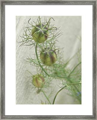 A Promise Of Love  Framed Print by Pamela Patch