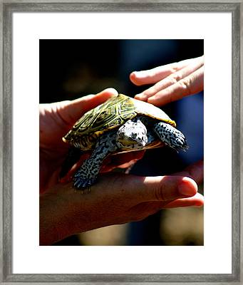 A Protected Species Framed Print by Michelle Harrington