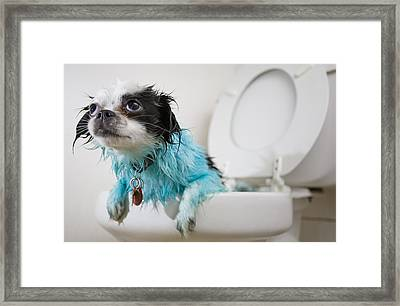 A Puppys Mistake Framed Print by Mike Raabe