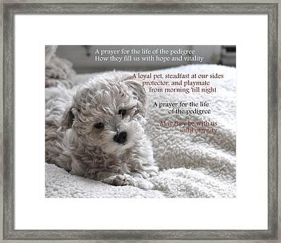 A Puppy's Prayer Framed Print