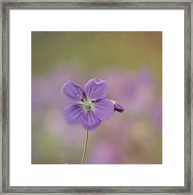 A Purple Moment Framed Print by Kim Hojnacki