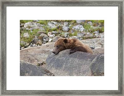 A Quick Nap Framed Print by Tim Grams