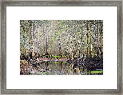 A Quiet Back Woods Place Framed Print by Carolyn Marshall