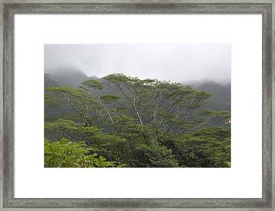 A Rainforest In Honolulu, Hawaii Framed Print by Stacy Gold