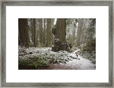 A Rare Snow Dusts The Trail Through Del Framed Print by Michael Nichols
