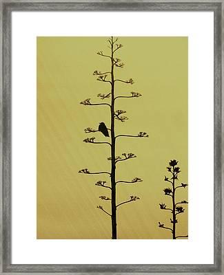A Raven's Rest Framed Print by James Mancini Heath