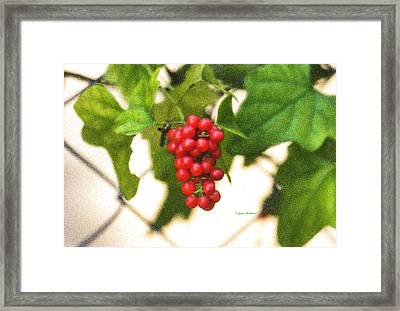 Framed Print featuring the photograph A Red Cluster by Joan Bertucci