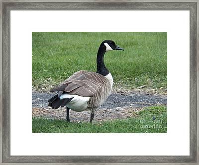A Regal Goose Framed Print by Judy Via-Wolff