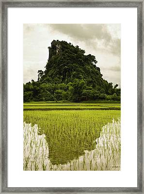 A Rice Field In Asia Framed Print by Nathan Lau