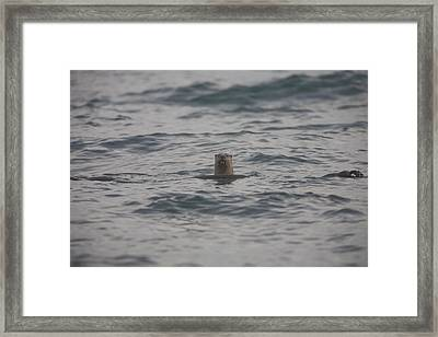 A River Otter Sticks His Head Framed Print by Taylor S. Kennedy