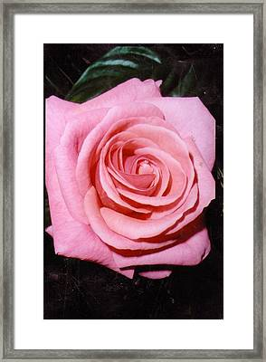 A Rose By Any Other Name Would Still Smell Just As Sweet Framed Print by Anne-Elizabeth Whiteway
