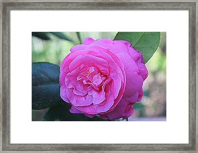 A Rose By Anyother Color Framed Print