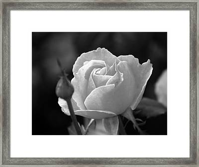 A Rose In Black And White Framed Print by Janice Adomeit